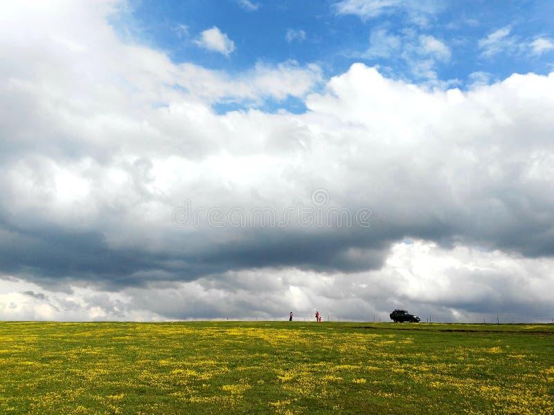 Blauer Himmel-weiße Wolken-Grün-Wiesen-Gelb-Blume stockbild
