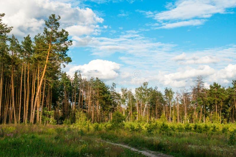 Blauer Himmel, Wolken und Bäume des Waldes lizenzfreie stockfotos