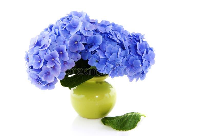 Blauer Hydrangea im Vase lizenzfreies stockbild