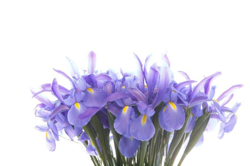 Blauer Irisblumen-Blumenstrau?abschlu? oben lokalisiert auf wei?em Hintergrund stockfotos