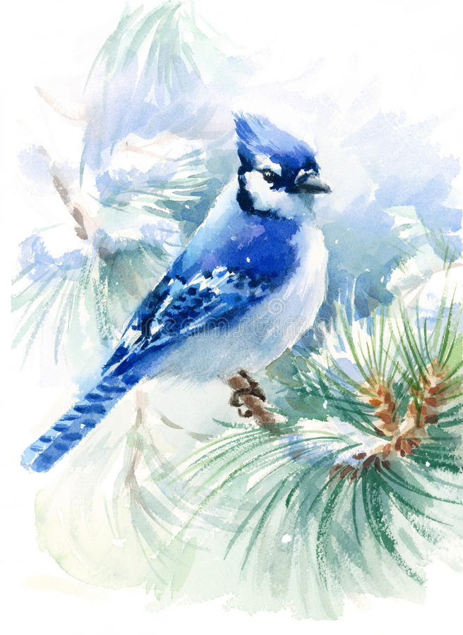 Blauer Jay Bird auf dem grünen Kiefernniederlassung Aquarell-Winter-Schnee-Illustrations-handgemalten lokalisiert auf weißem Hint stock abbildung