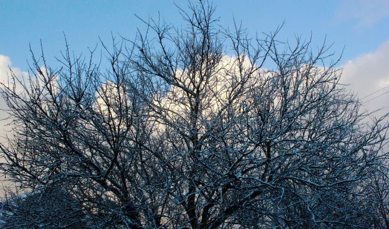 blauer klarer Himmel im Winter und Treetops, Bild für Entwurf stockfotografie