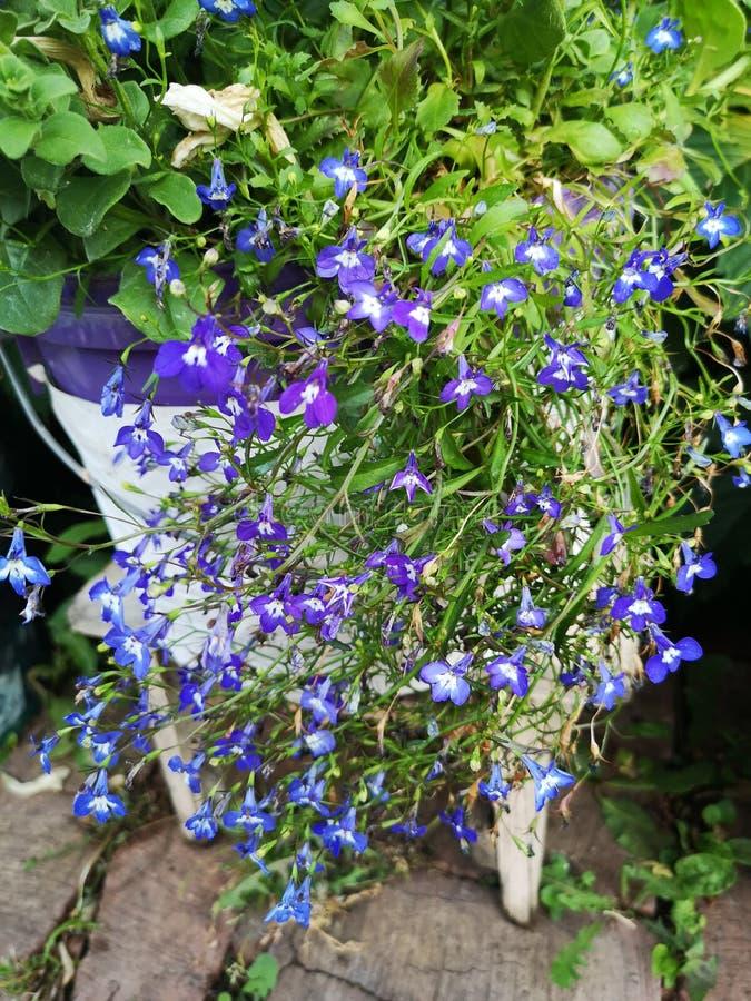 Blauer kleiner Blumengarten lizenzfreie stockfotos
