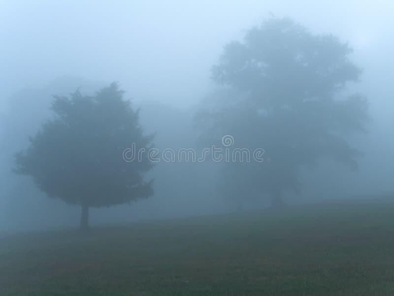 Blauer Morgen-Nebel Stockfotos