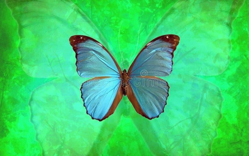 Blauer Morpho-Schmetterling mit vibrierendem grünem Hintergrund lizenzfreie abbildung