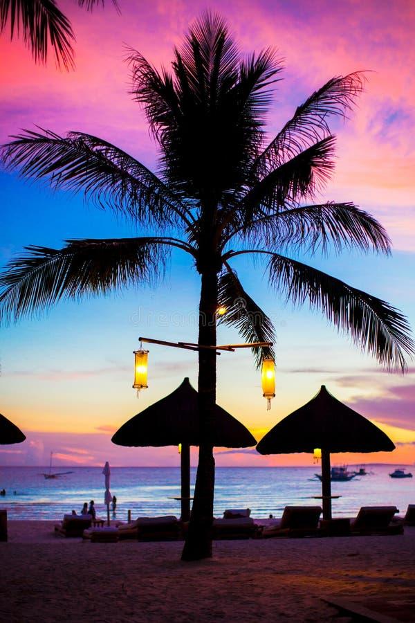 Blauer rosa und roter Sonnenuntergang über Seestrand mit Palmeschattenbild lizenzfreies stockbild