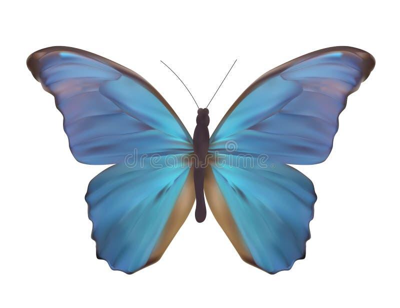 Blauer Schmetterling lokalisiert auf weißer realistischer Vektor-Illustration lizenzfreie abbildung