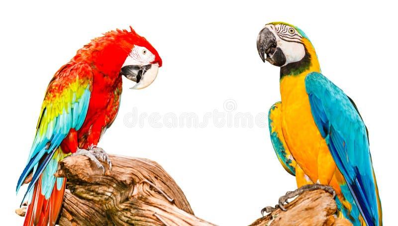 Blauer und gelber Macaw lizenzfreie stockfotografie