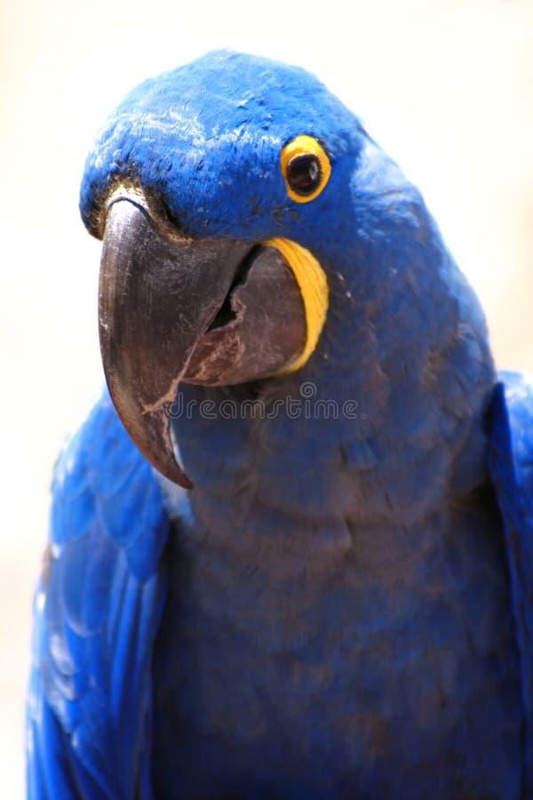 Blauer Vogel stockbild