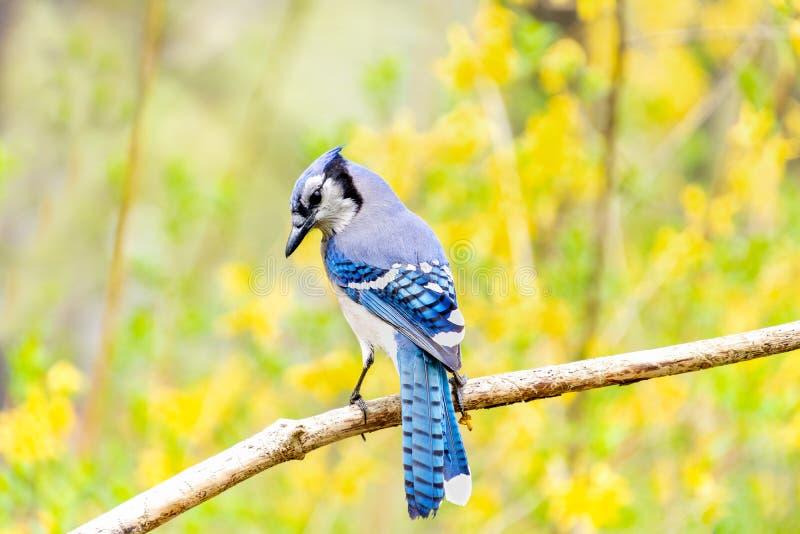 Blauer Vogel mit gelben Blumen stockfotografie