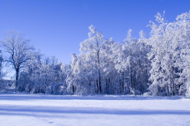 Blauer Wald lizenzfreies stockfoto