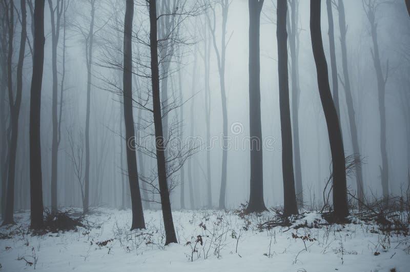 Blauer Wald im Winter mit Nebel und Schnee lizenzfreie stockfotografie