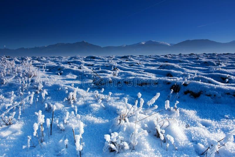Blauer Winter lizenzfreies stockbild