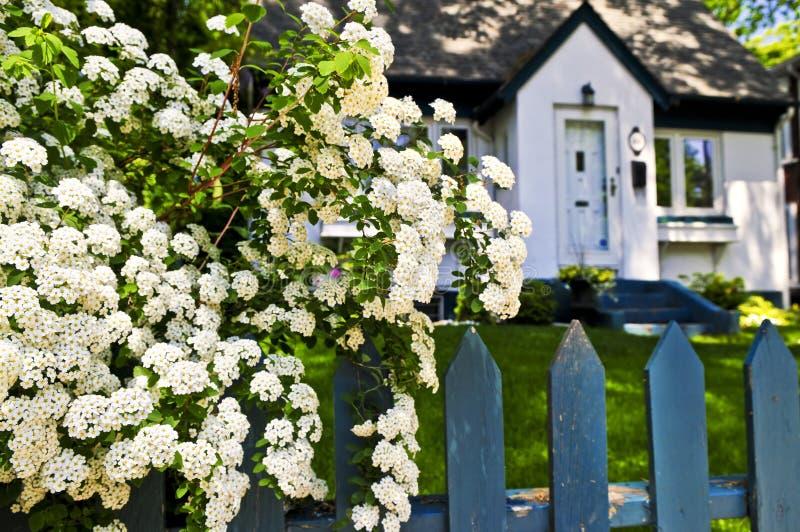 Blauer Zaun mit weißen Blumen stockfotos