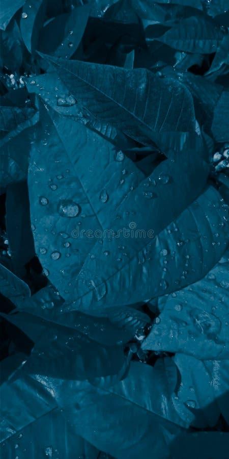 Blaues Blatt lizenzfreie stockbilder