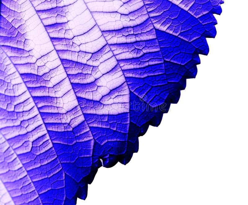 Blaues Blatt auf einem schwarzen Hintergrund stockbild