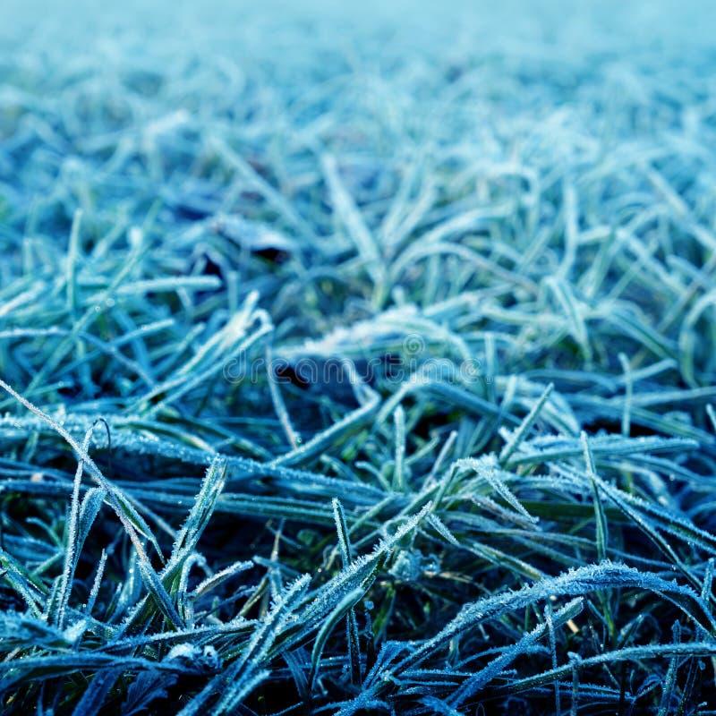 Blaues eisiges Gras stockbilder