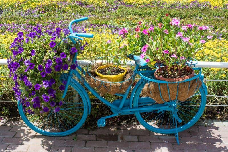 Blaues Fahrrad verziert mit bunten Blumen in den Töpfen stockbild