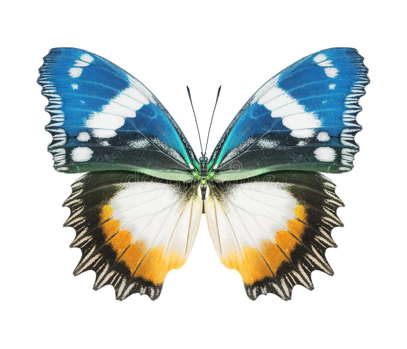 Blaues Gelb des Schmetterlinges stockfotografie