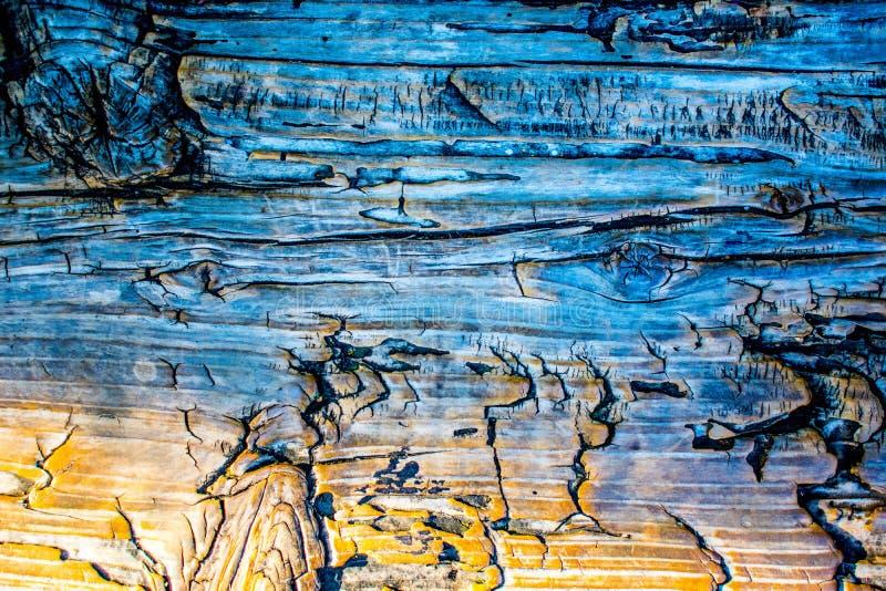 Blaues Holz lizenzfreie stockfotos