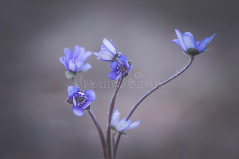 Blaues natürliches lizenzfreie stockfotos