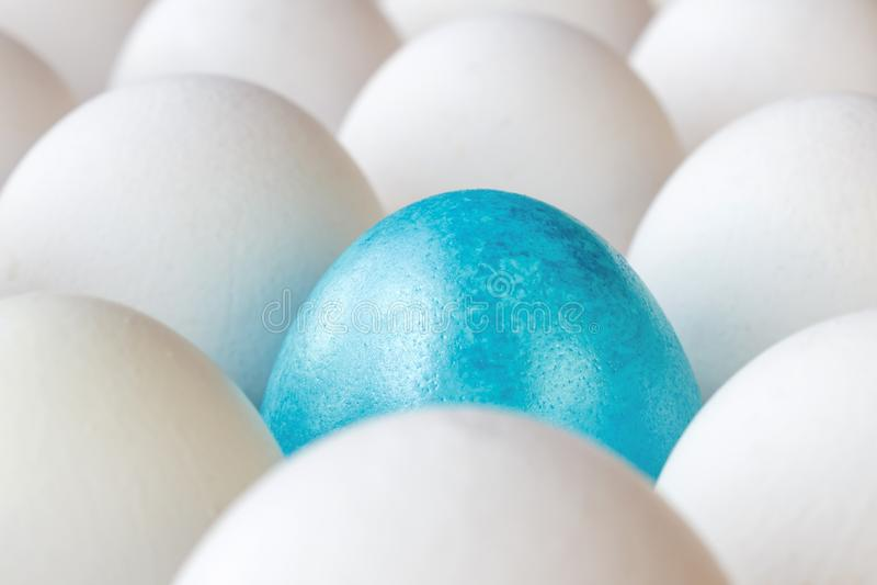 Blaues Osterei unter weißen Hühnereien in der Pappbehälternahaufnahme lizenzfreie stockfotos