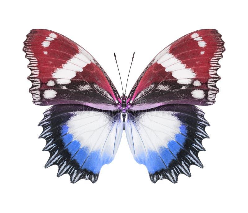 Blaues Rot des Schmetterlinges lizenzfreie stockbilder