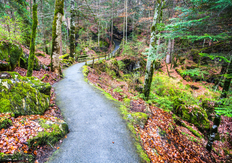 Blausee, Switzerland - Path In The Woods stock images
