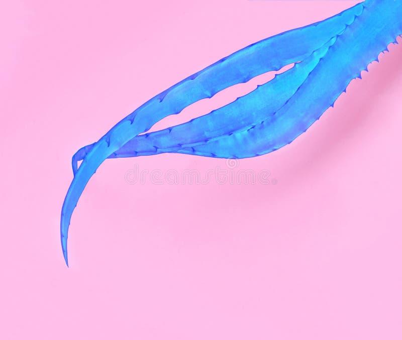 Blauw aloë Vera op roze document achtergrond In minimale pop-artstijl en kleuren royalty-vrije stock afbeeldingen