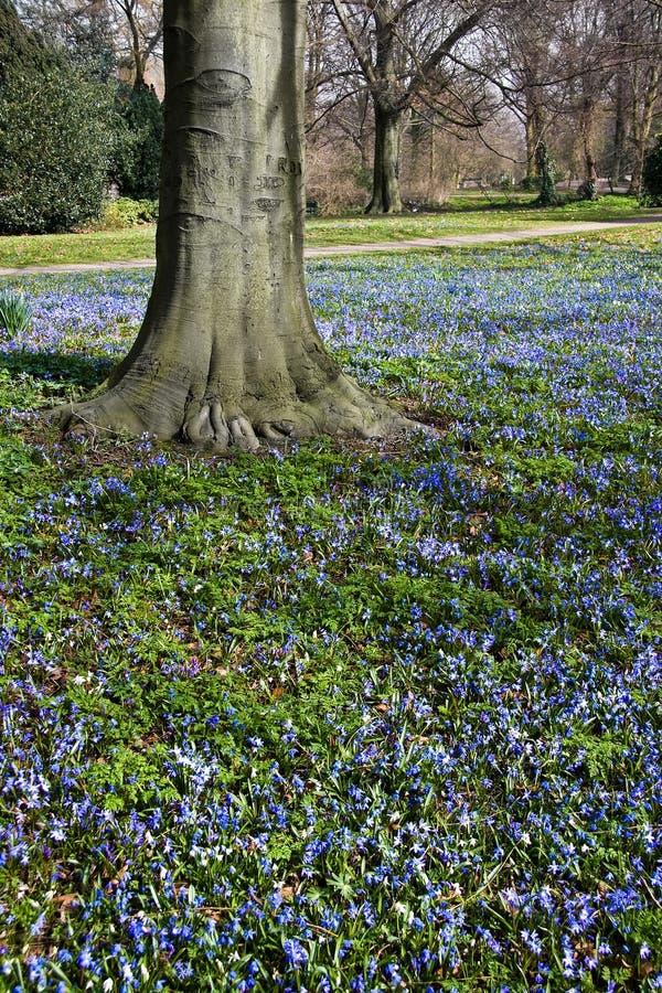 Blauw bloemtapijtwerk in de lente stock foto