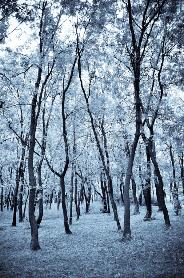 Blauw bos stock fotografie