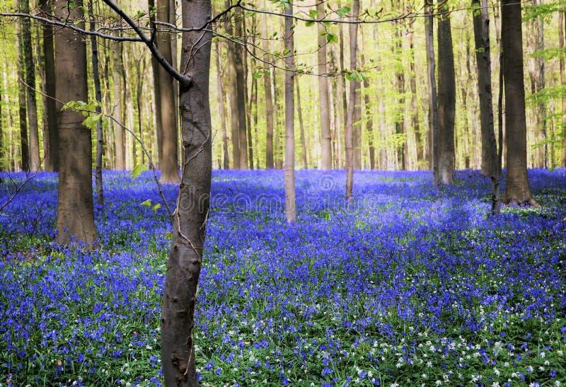 Blauw bos stock foto's