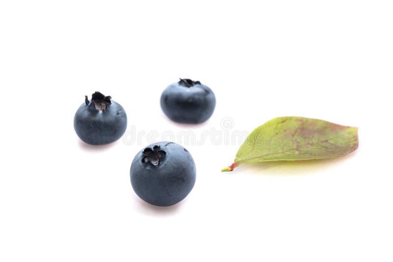 Blauw Bosbessenfruit met groen blad als geïsoleerde close-up royalty-vrije stock foto