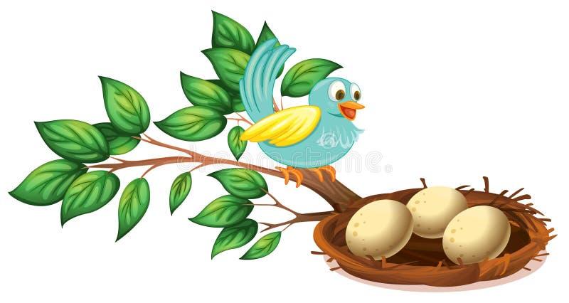 Blauw de vogelwaarnemings eieren in het nest vector illustratie