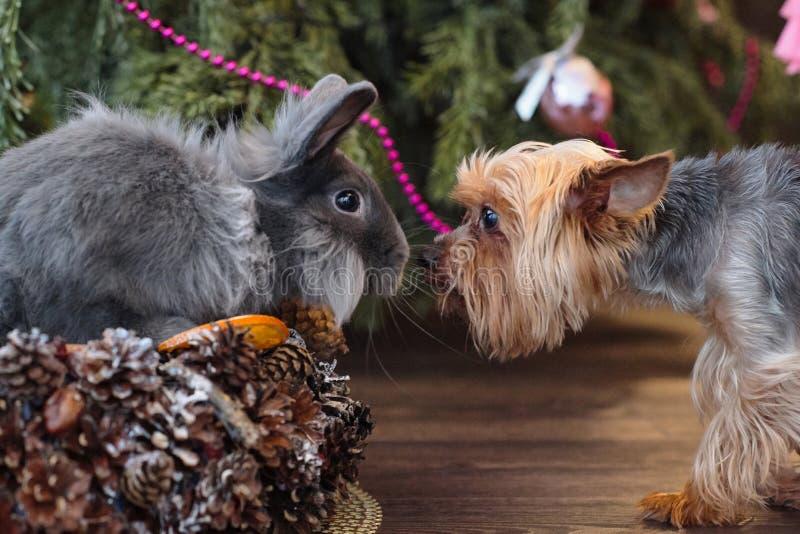 Blauw decoratief konijn en een kleine hond aan Kerstmis tre royalty-vrije stock foto