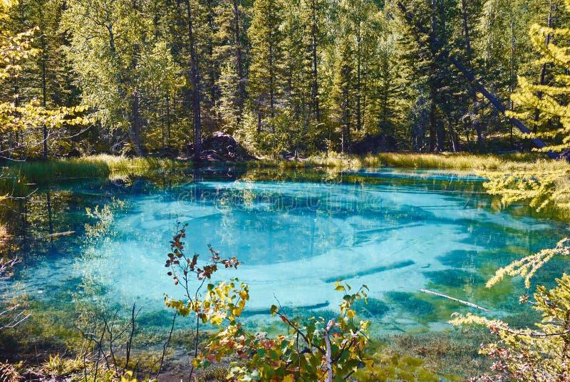 Blauw die geisermeer door bossen in de Altai-Berg, Rusland wordt omringd royalty-vrije stock foto's