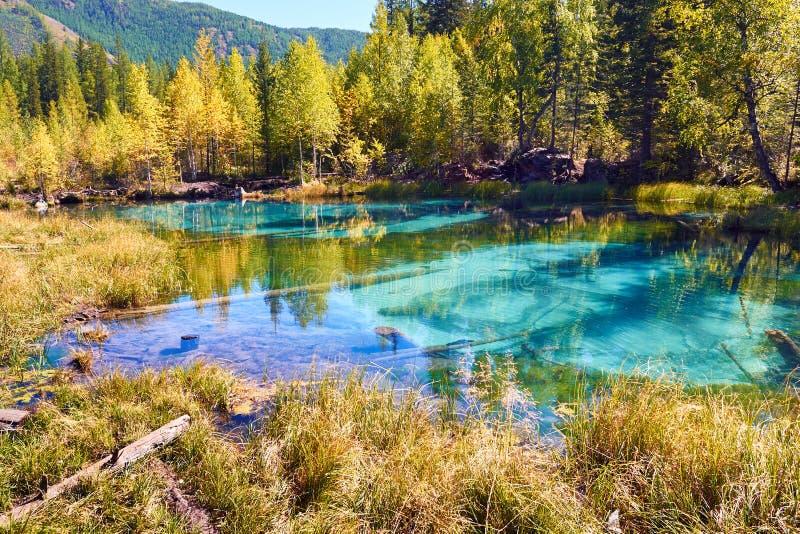 Blauw die geisermeer door de herfstbossen wordt omringd in de Altai-Berg, Siberië, Rusland stock foto's