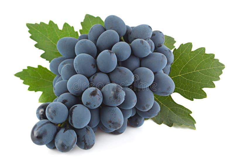 Blauw druivenfruit stock foto
