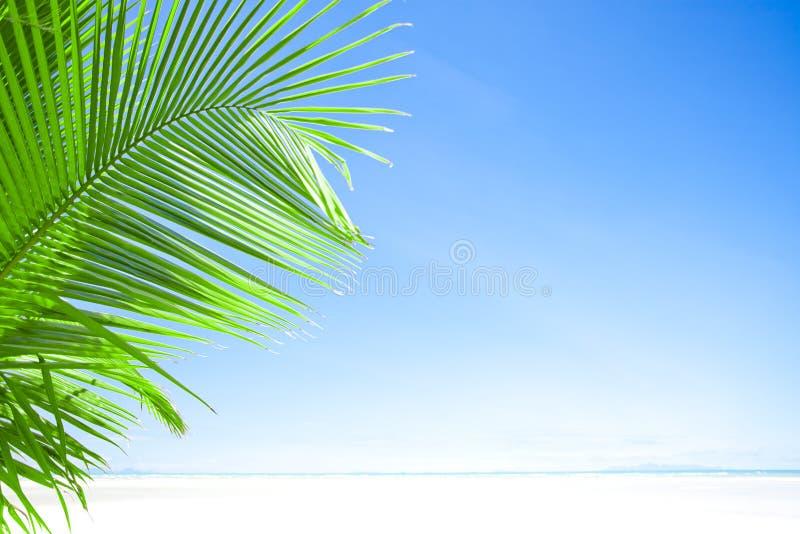 Blauw en palm royalty-vrije stock afbeelding