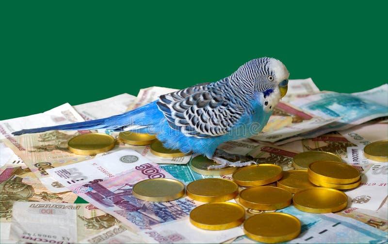 Blauw golvend papegaai en geld op groene achtergrond. stock afbeelding