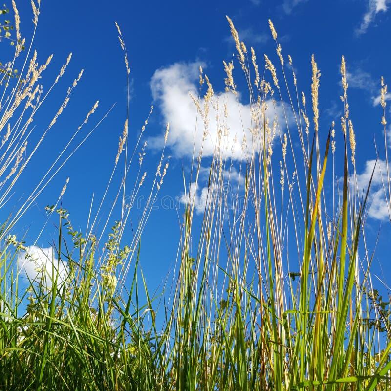 Blauw hemel en onkruid royalty-vrije stock afbeelding