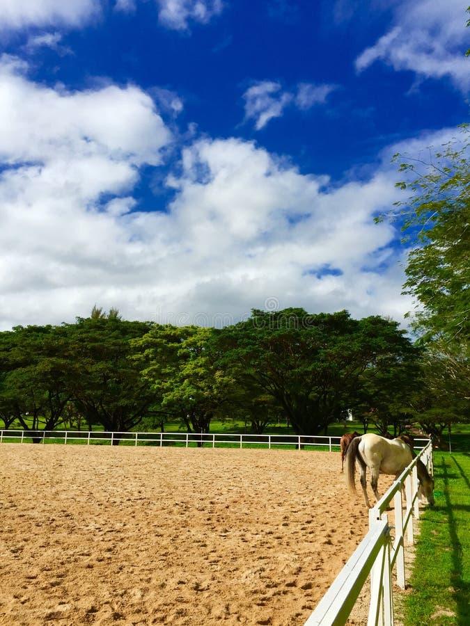 Blauw hemel & Paard stock afbeelding