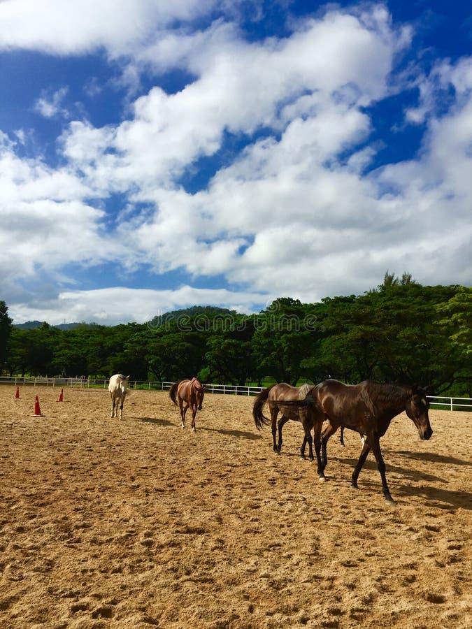 Blauw hemel & Paard stock foto's