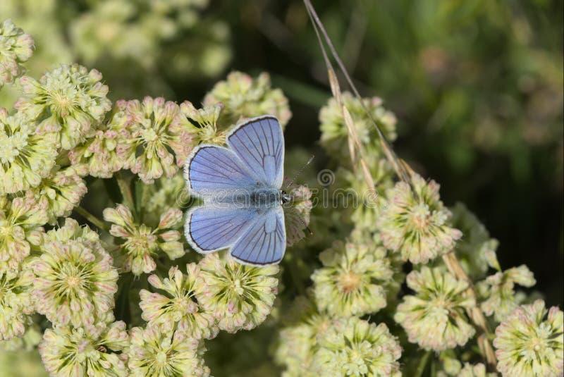 Blauw koper stock afbeelding