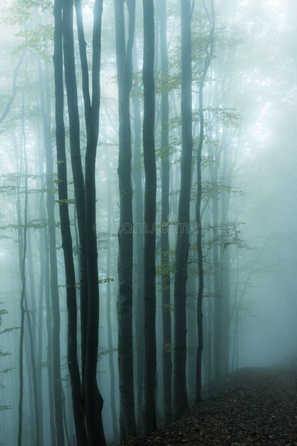 Blauw mistig mystiek bos stock foto