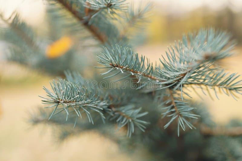 Blauw net takje met hoar vorst in de herfstochtend stock foto