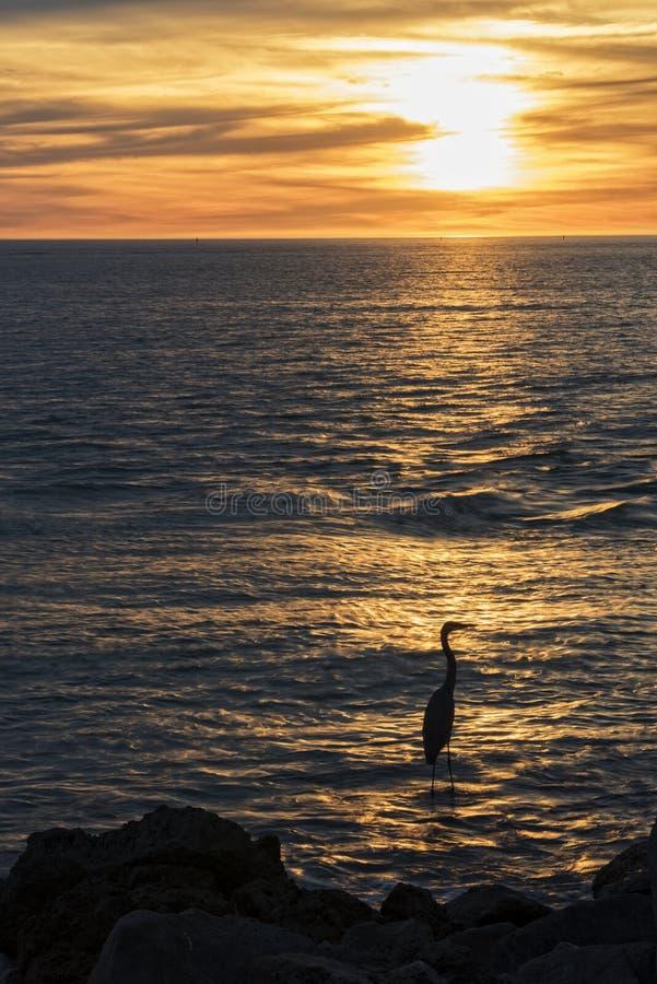 Blauw Reigersilhouet bij Zonsondergang stock afbeelding