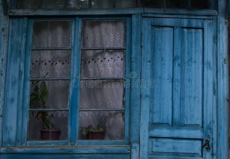 Blauw venster en groene installaties, wit gordijn royalty-vrije stock afbeeldingen