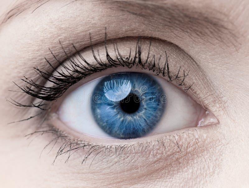 Blauw vrouwen enig oog stock afbeeldingen