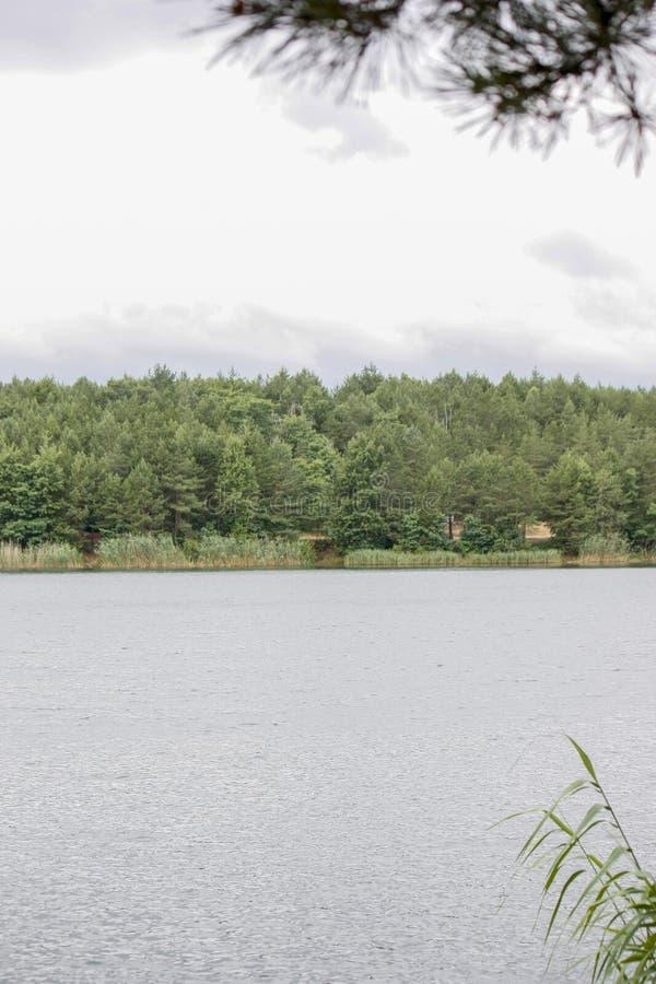 Blauw water in een bosmeer met pijnbomen en andere bomen Blauwe meren in de Oekra?ne stock fotografie